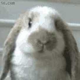 Led Bunny